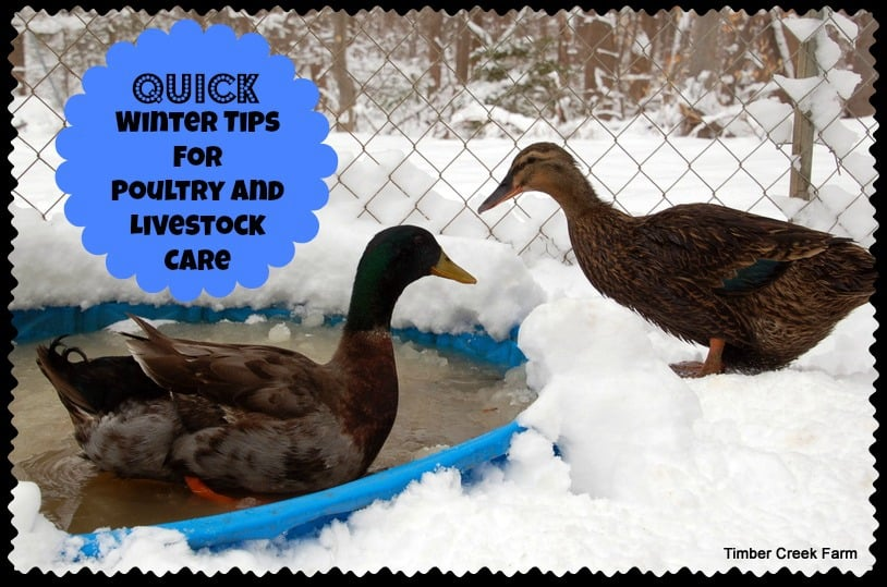Quick Winter Tips  https://timbercreekfarmer.com