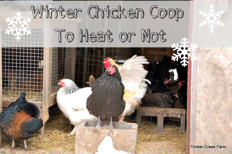 ... Concerns Winter Chicken Coop