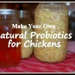 Natural Probiotics for Chickens