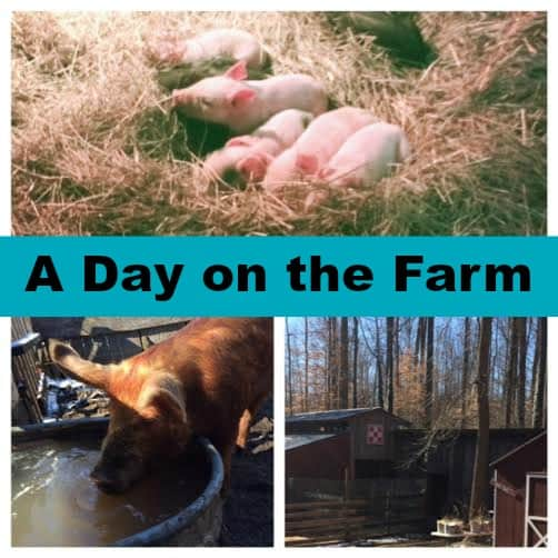 A Day on Our Farm