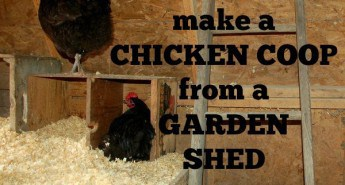 Make a chicken coop from a garden shed