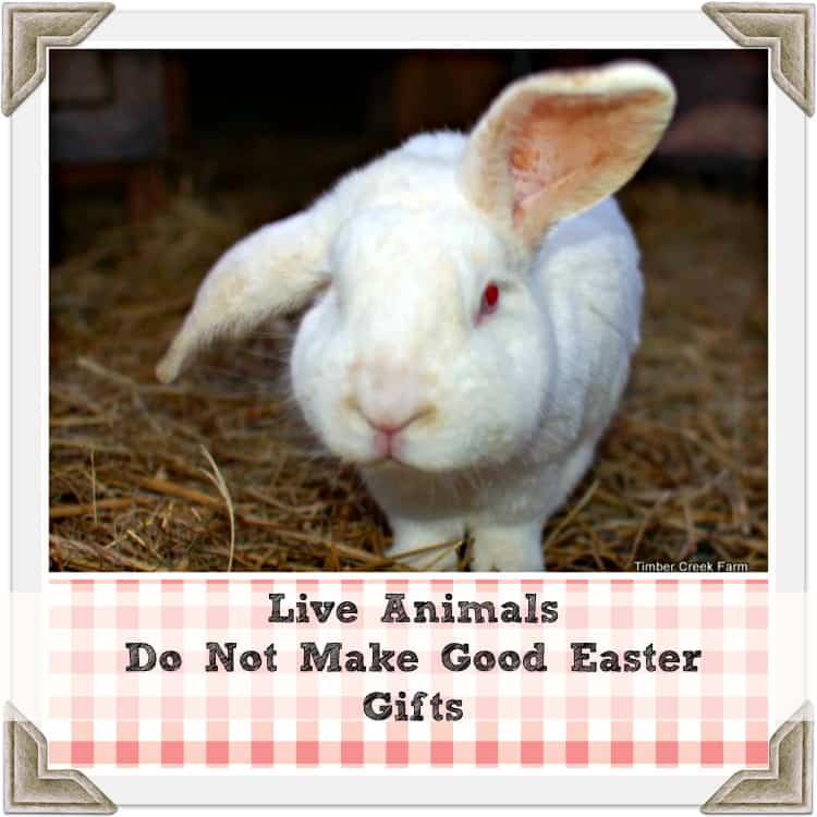 Live Animals for Easter?