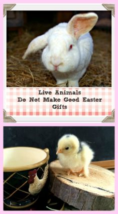 live animals for Easter