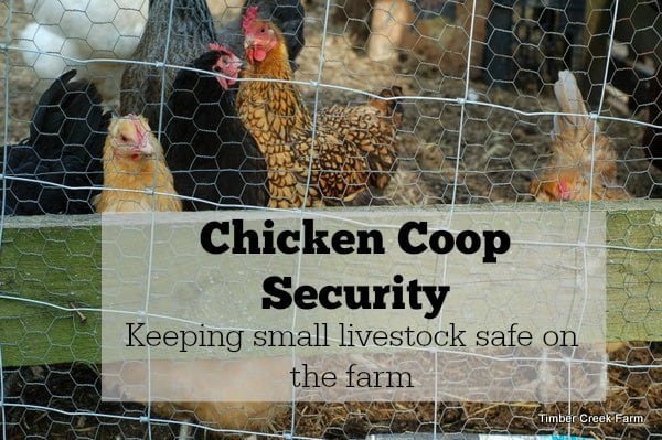 Chicken Coop security barriers