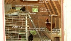 chicken coop remodel