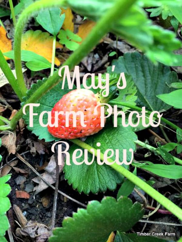 May Review from Timber Creek Farm