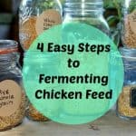 4 easy steps to fermenting chicken feed