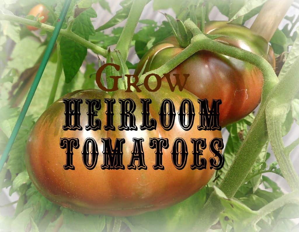 15 Great Resources For Heirloom Tomato Gardeners.
