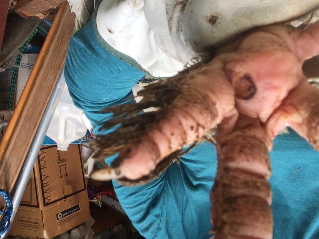 treating bumblefoot