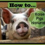 How to Raise Pigs Naturally on a Small Farm