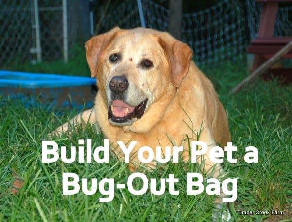 Pet Bug-out bag