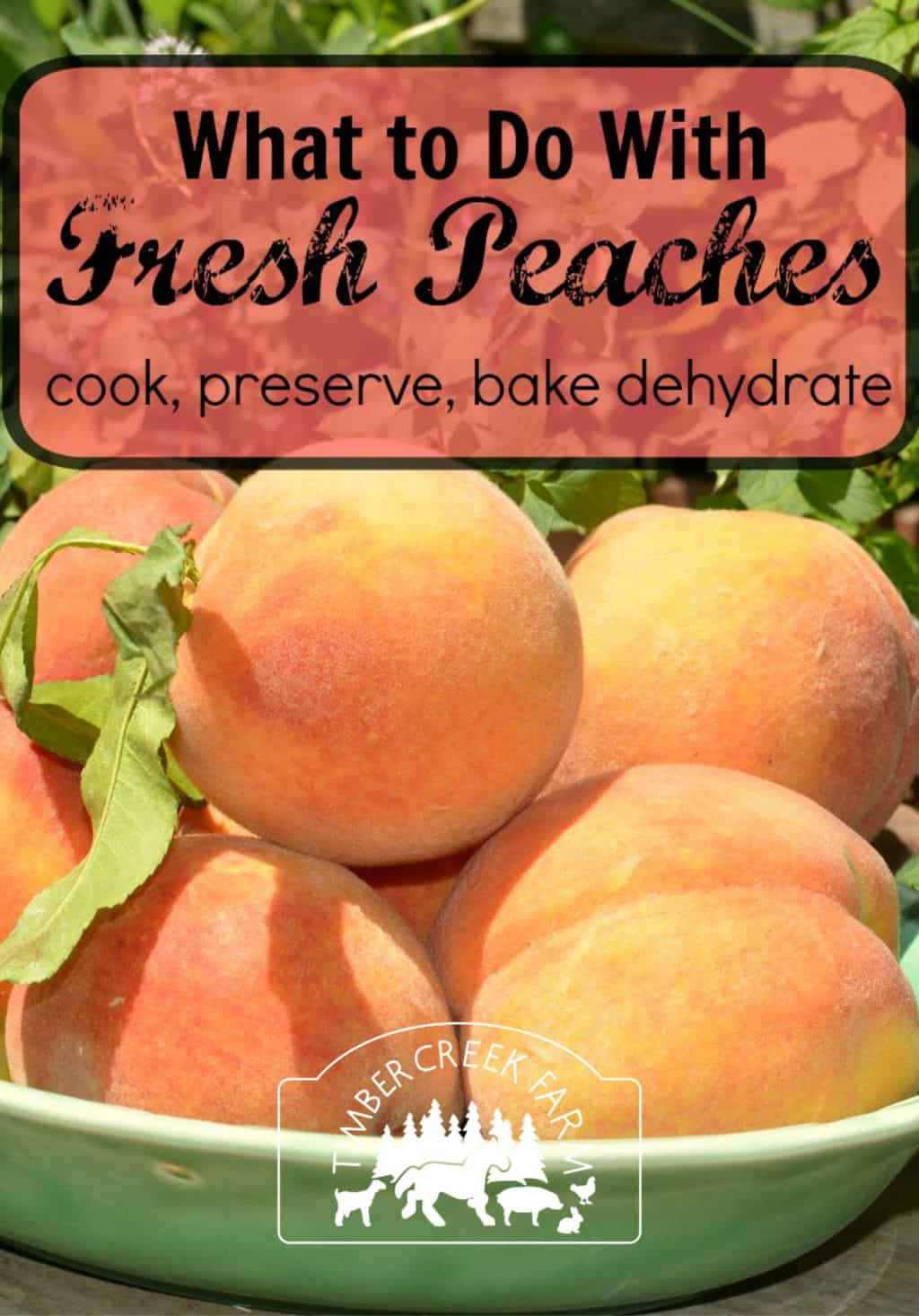 Cooking Peaches, Preserved, Baked and Delicious - Timber