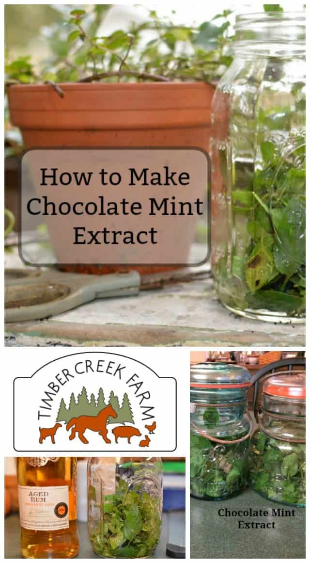 chocolate mint extract