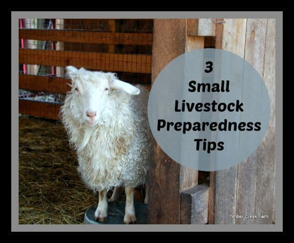 3 Small Livestock Preparedness Tips