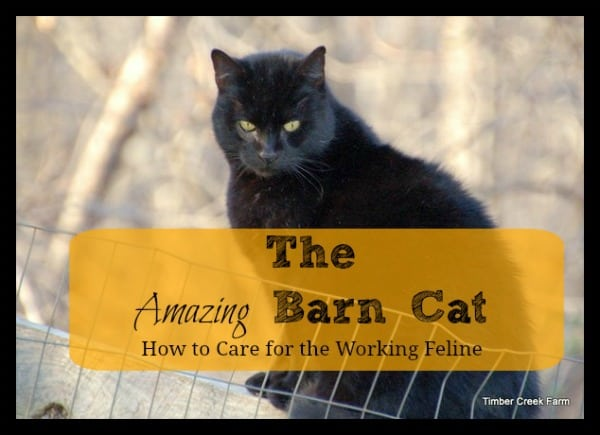 Barn Cats- How to Care for the Working Feline - Timber ...