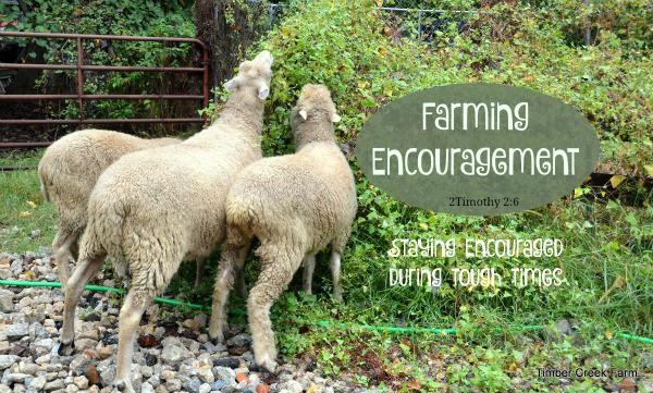 Farming Encouragement