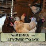 Self Sustaining Living -Reusing Chicken Coop Trash
