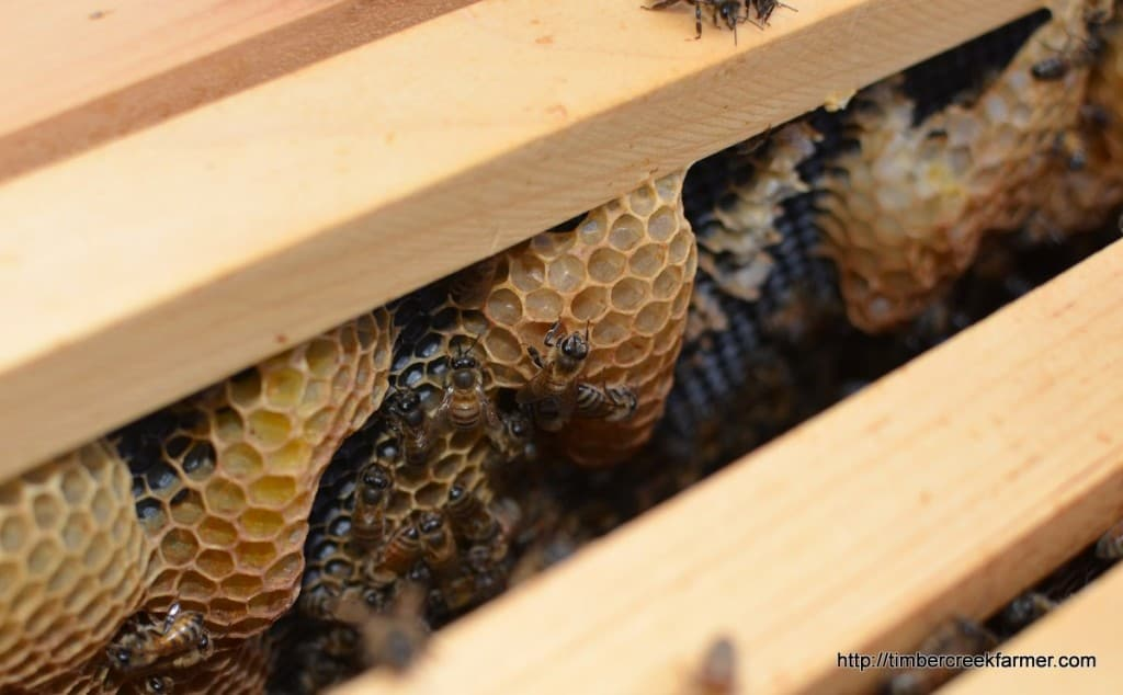 honeybees and fall care