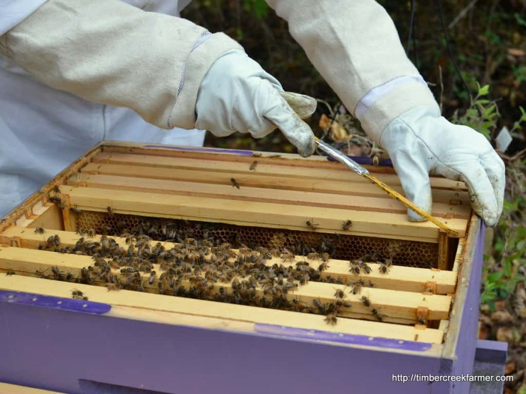 honeybees fall care