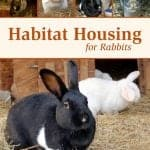 housing for rabbits