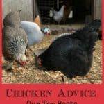 chicken advice