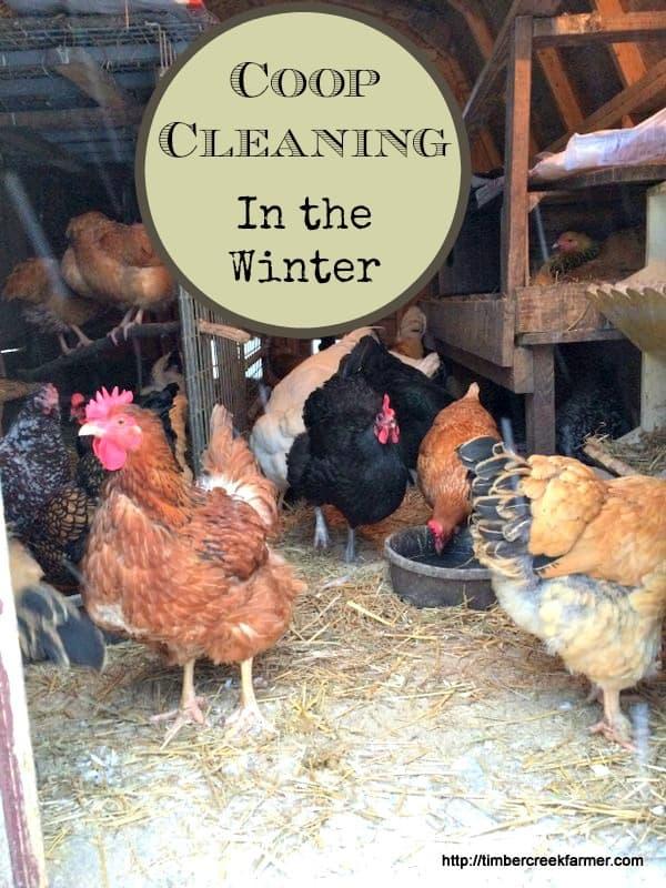 winter chicken coop cleaning
