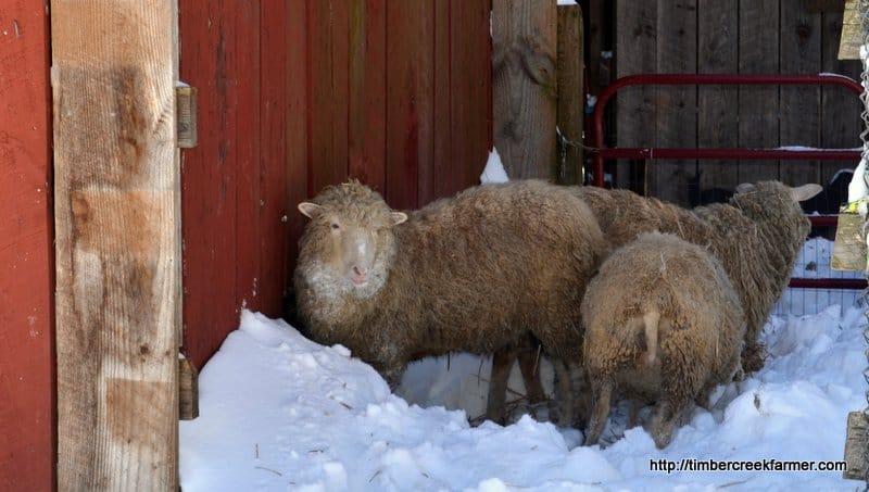 farm snow cleanup