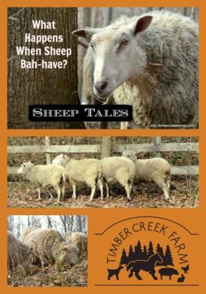 Sheep tales