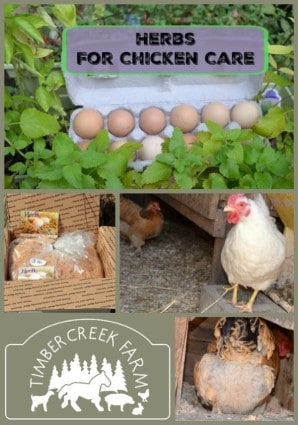 herbs for chicken care