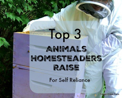 Top Three Animals Homesteaders Raise