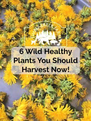healthy wild plants