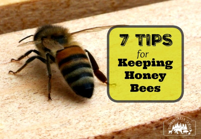 Best Tips For Keeping Honey Bees