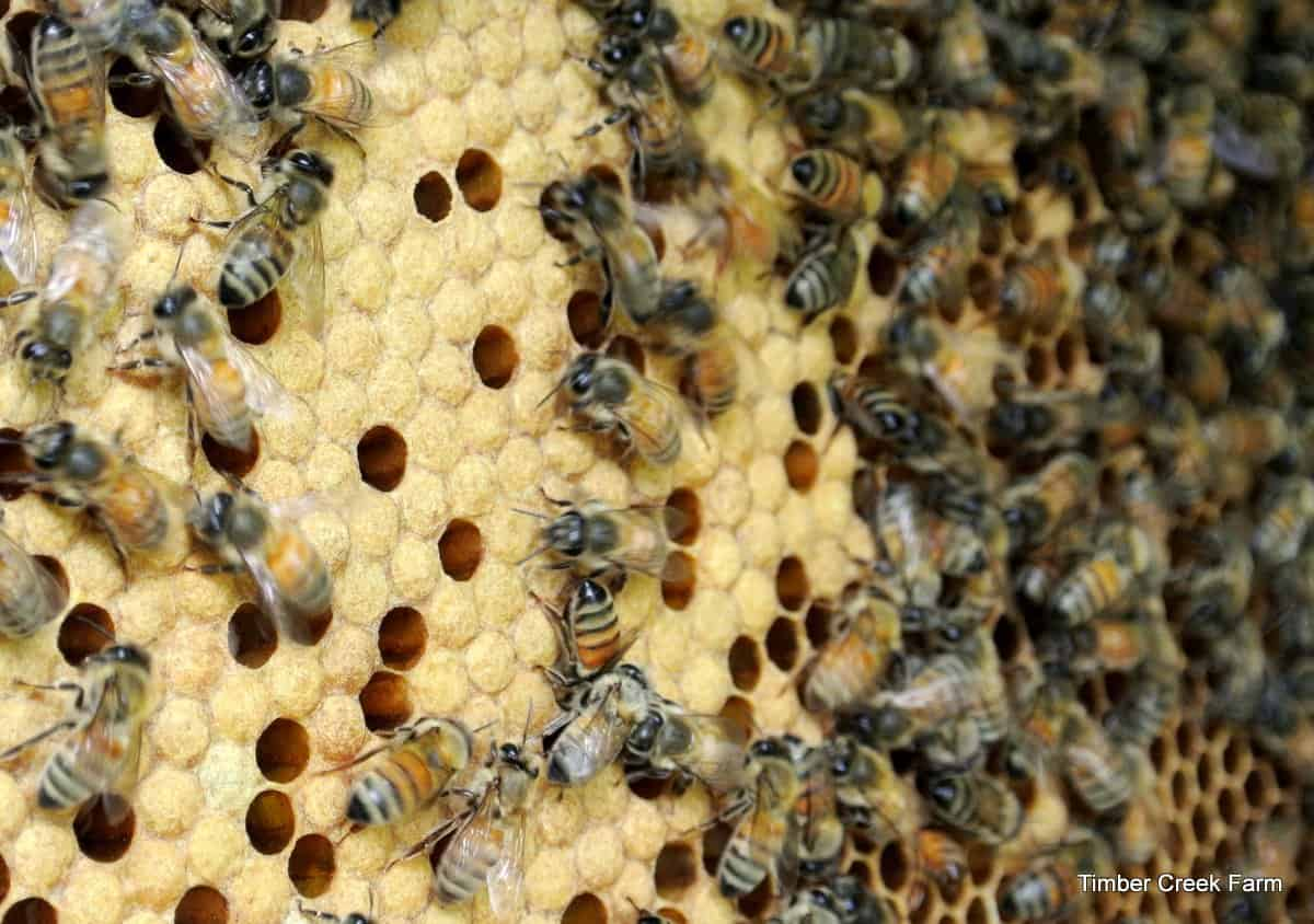 best tips for keeping honey bees timber creek farm