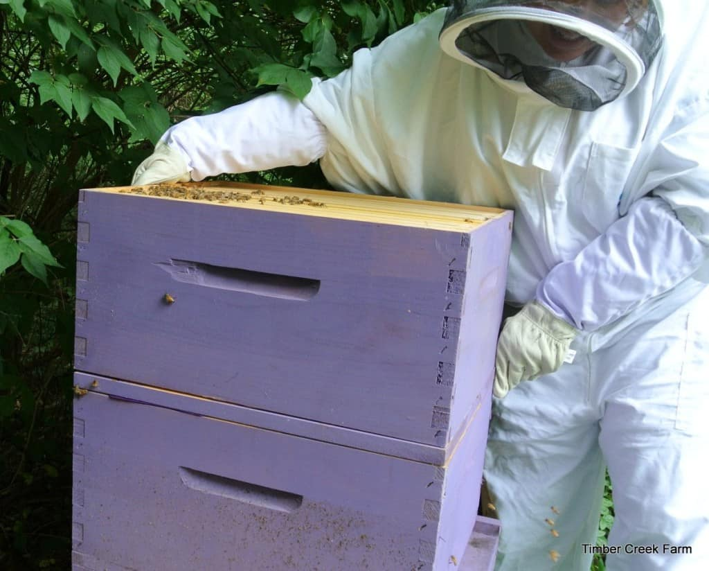 Langstroth honey bee hive