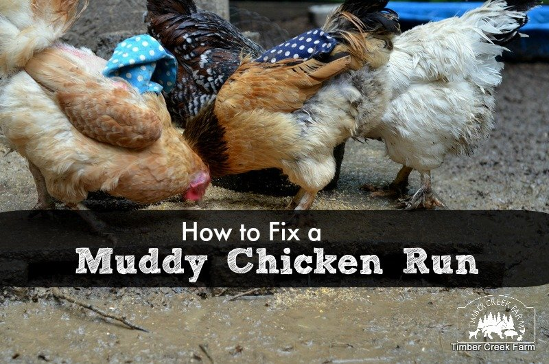 muddy chicken run