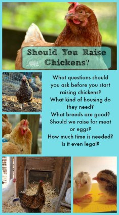 should you raise chickens