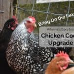 Luxury Chicken Coop Upgrade