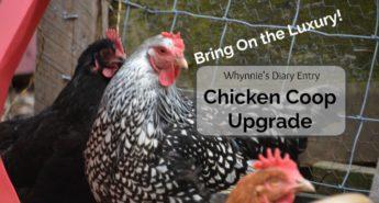Luxury Chicken Coop Upgrade
