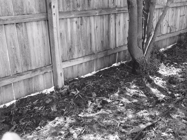 abandoned garden beds