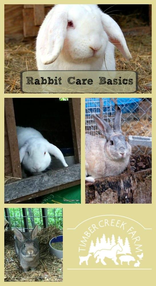 Rabbit Care Basics - Getting Started - Timber Creek Farm