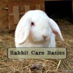 Rabbit Care Basics - Getting Started
