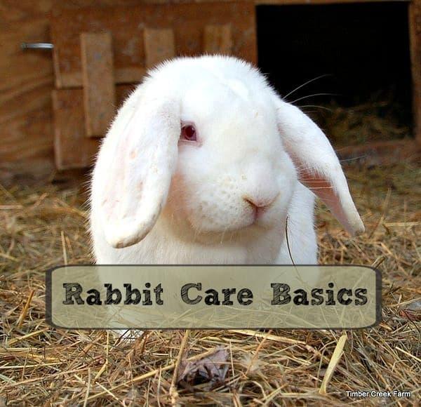 Rabbit Care Basics – Getting Started