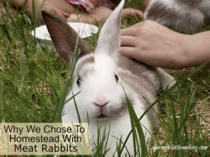 bring-rabbits-home-banner-768x576