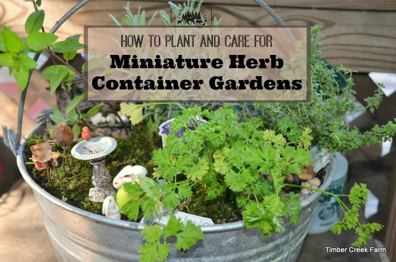 Container Gardens for Fall and Winter Indoor Growing