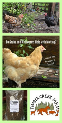 grubs and mealworms