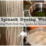 Using Spinach Dye for Natural Wool Color