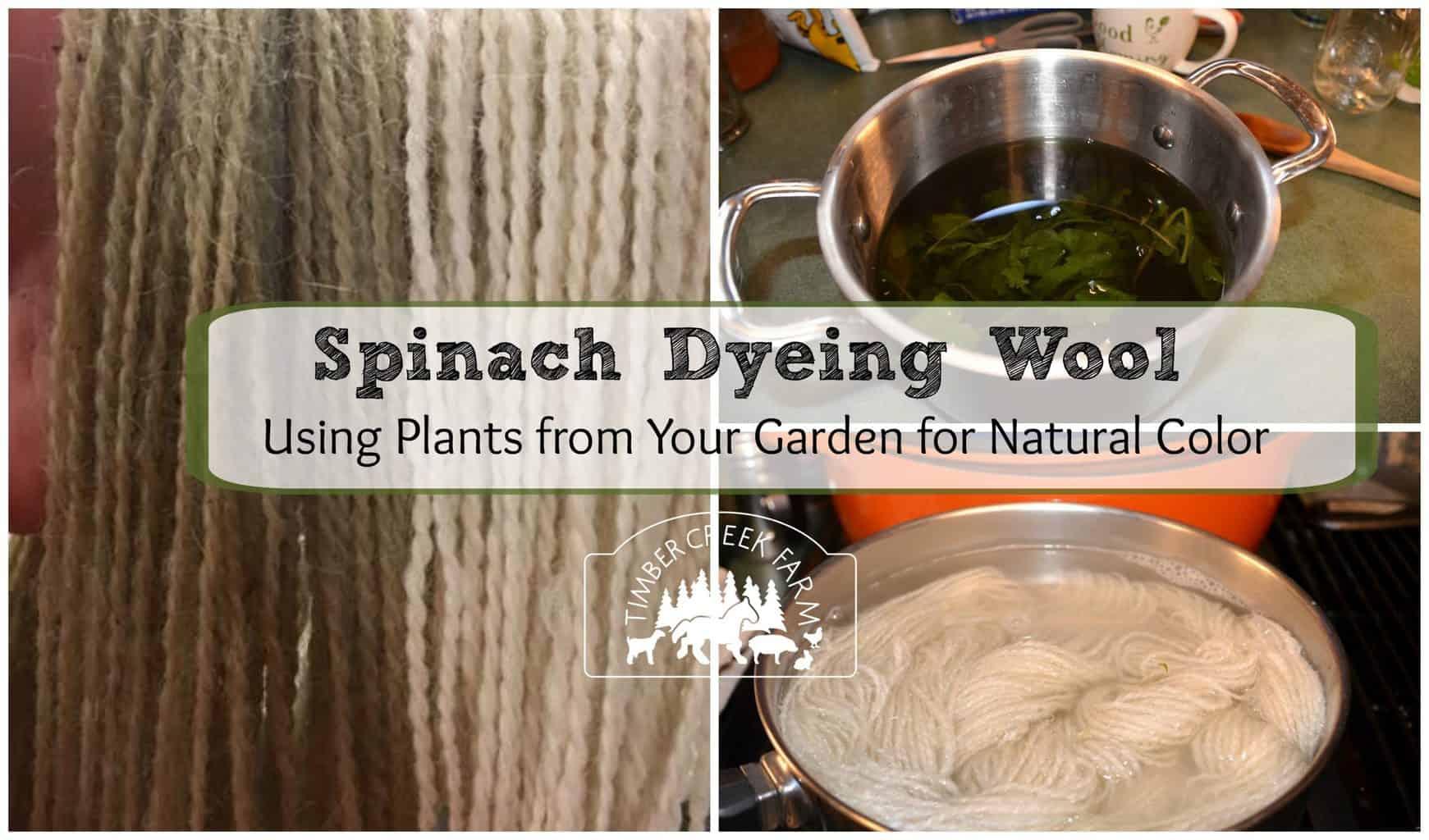 spinach dye