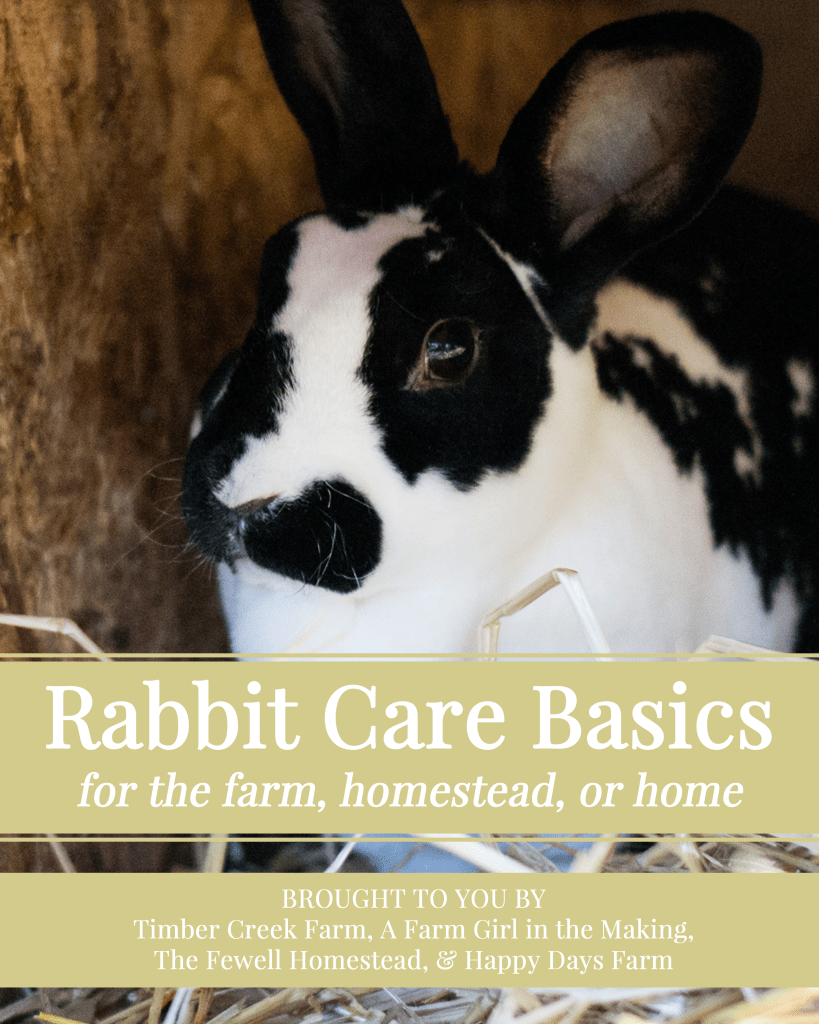 rabbit care basics