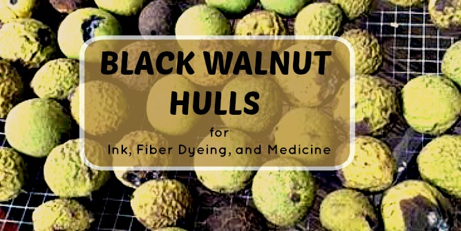 Black Walnut Hulls For Dye and Natural Medicine - Timber