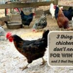 Three Things Chickens Don't Need For Winter (and three that they do!)